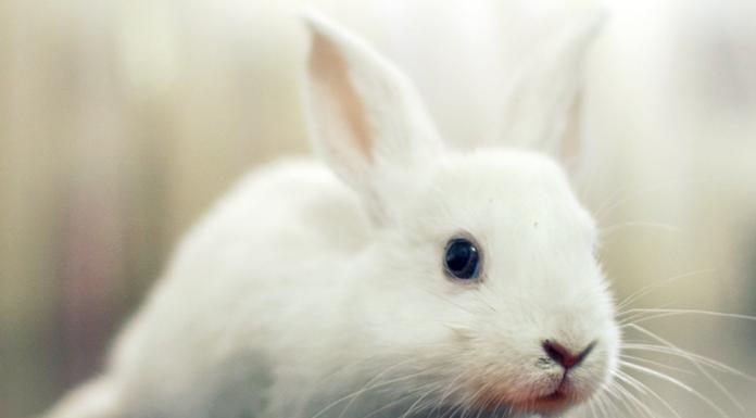 bunny & carrot