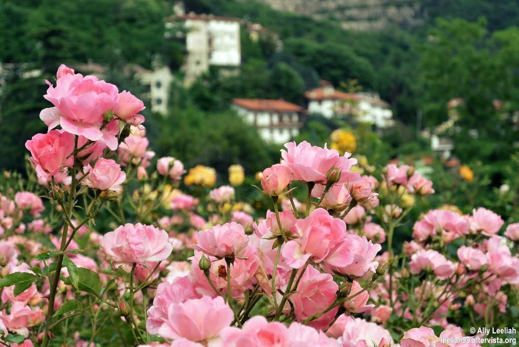 Il roseto del Parco di San Giovanni a maggio © leeliah99.altervista.org
