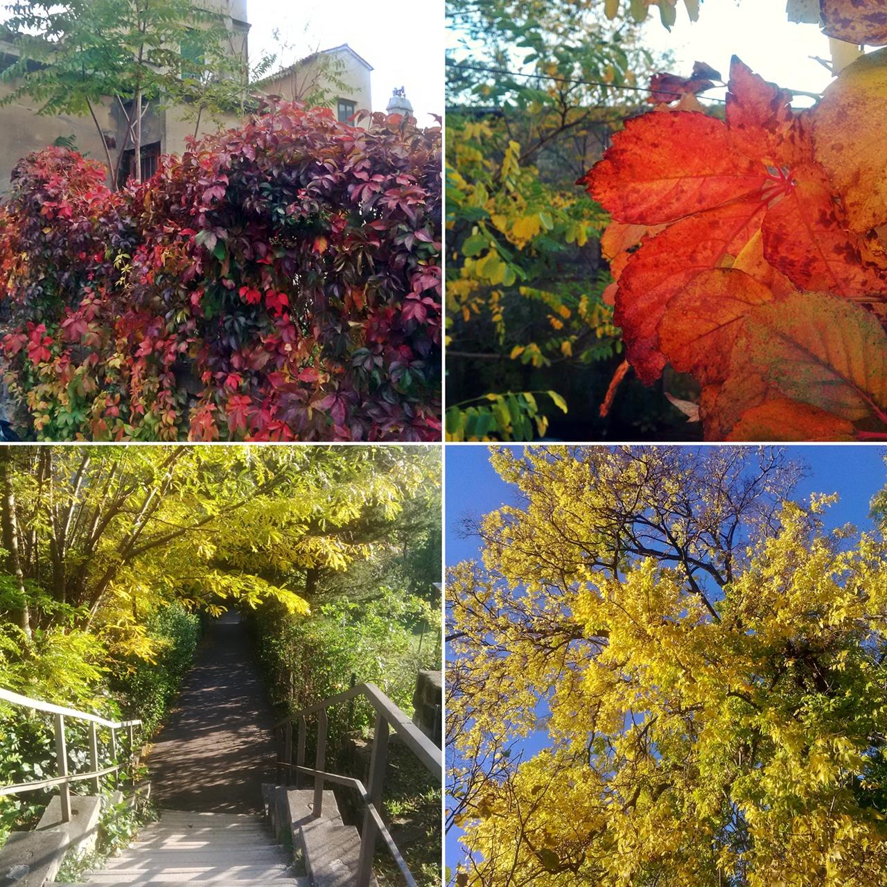 Autunno collage: foglie © leeliah99.altervista.org