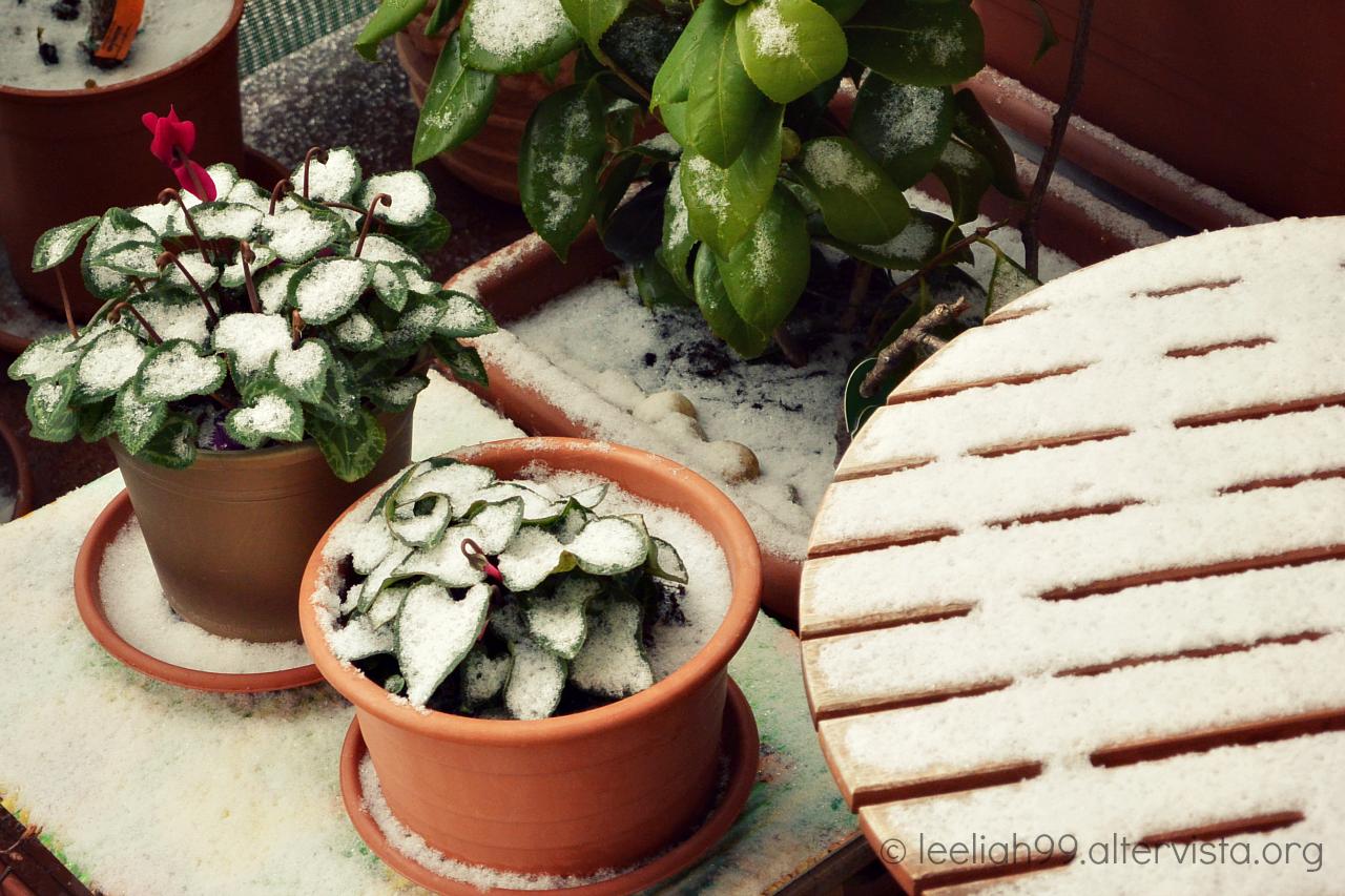 La prima neve del 2016 © leeliah99.altervista.org