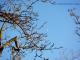 La luna gioca tra i rami © leeliah99.altervista.org