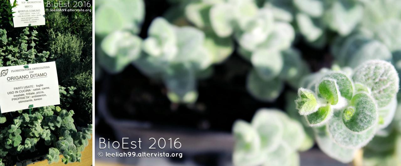 BioEst 2016 al Parco di San Giovanni a Trieste © leeliah99.altervista.org