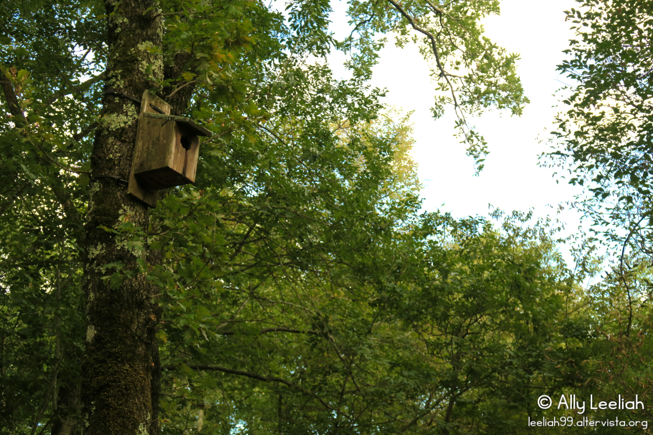 Il giardino botanico Carsiana © leeliah99.altervista.org