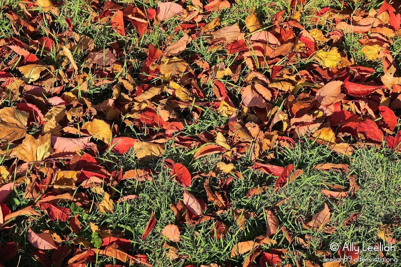 Autunno al Parco di Villa Revoltella a Trieste © leeliah99.altervista.org