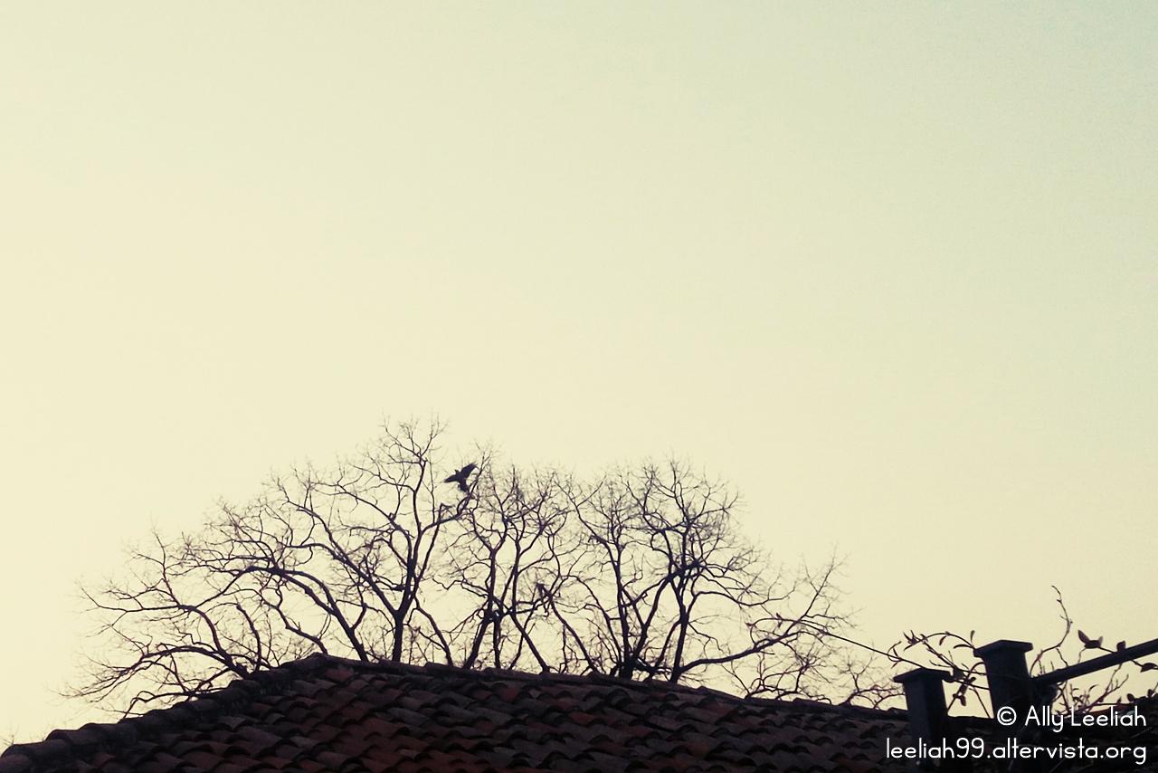Foto del giorno 29-01-17 © leeliah99.altervista.org