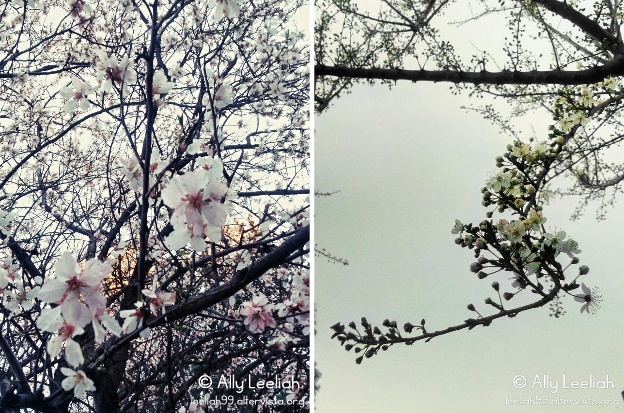 Primavera 2017 al Parco di San Giovanni a Trieste © leeliah99.altervista.org