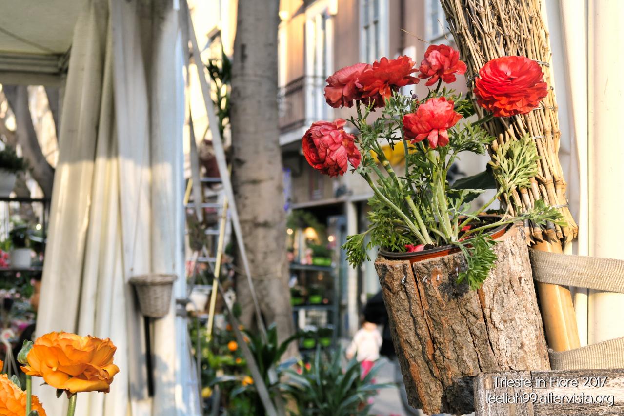 Trieste in Fiore 2017 © leeliah99.altervista.org