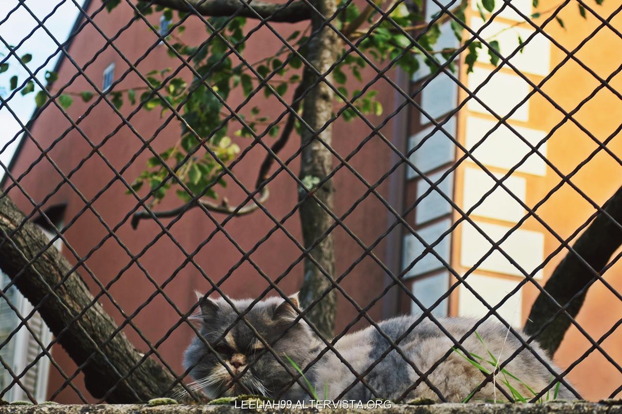 Autunno sotto casa © leeliah99.altervista.org
