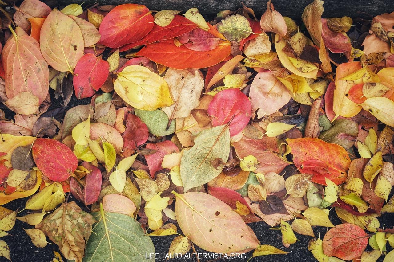 Autunno nel Parco di San Giovanni © leeliah99.altervista.org