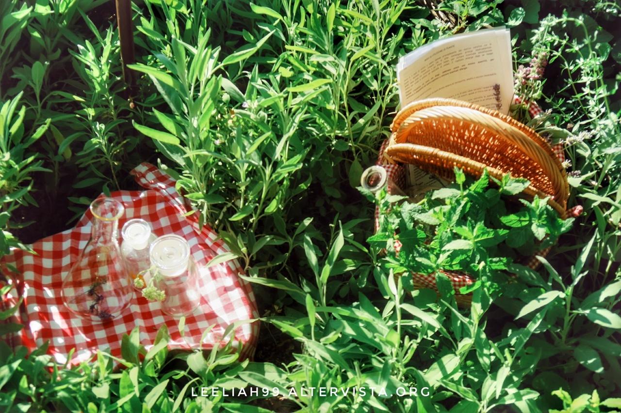Orto botanico © leeliah99.altervista.org