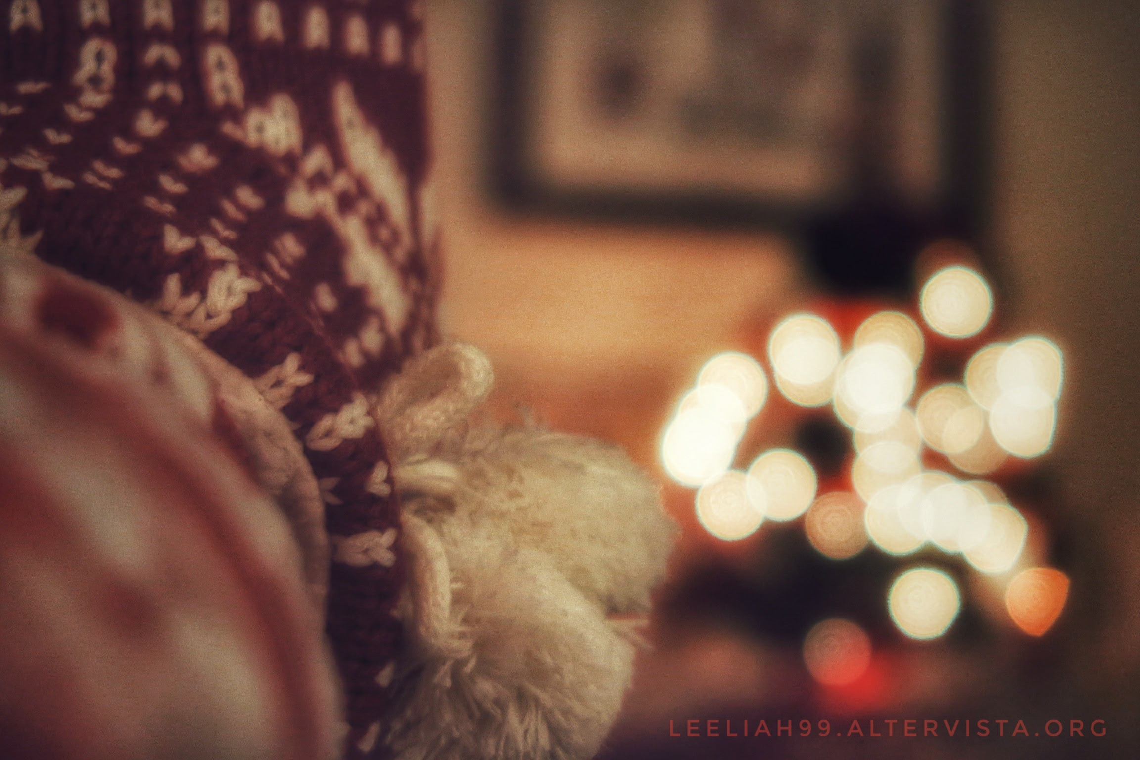 In postazione sul divano con vista alberello © leeliah99.altervista.org