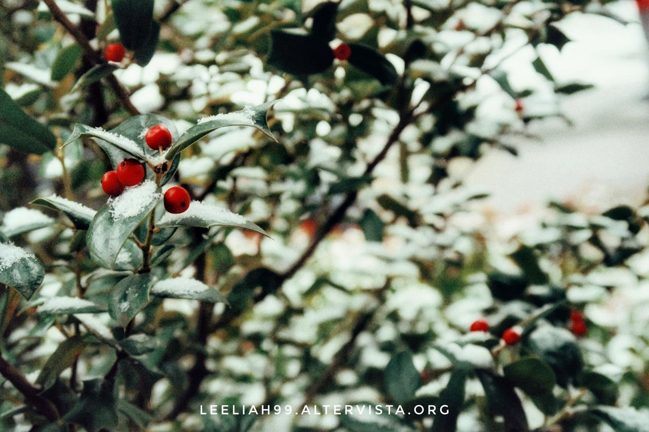 Neve nel Parco di San Giovanni a Trieste © leeliah99.altervista.org