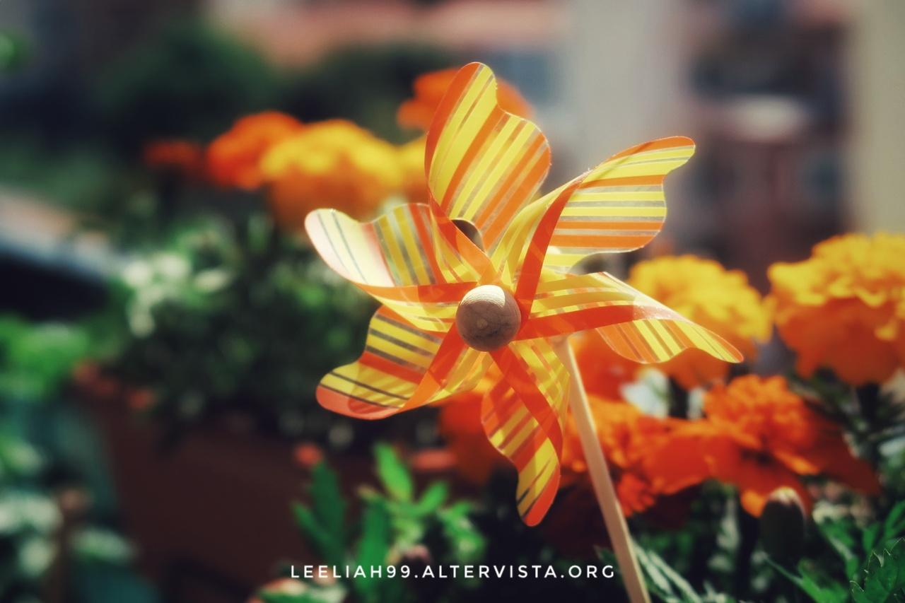 Girella sul terrazzo © leeliah99.altervista.org