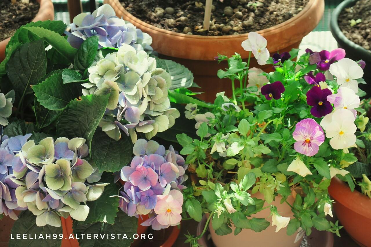 Violette sul terrazzo © leeliah99.altervista.org