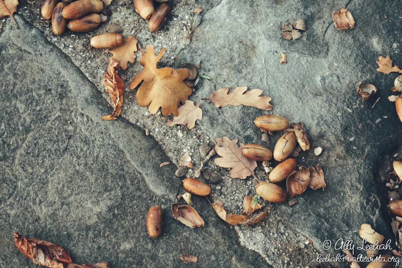 Novembre nel Parco di San Giovanni a Trieste © leeliah99.altervista.org