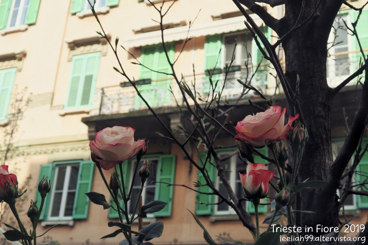 Trieste in Fiore 2019 © leeliah99.altervista.org