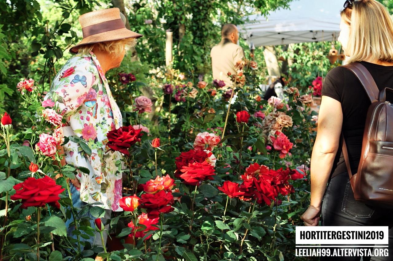 Horti Tergestini 2019 © leeliah99.altervista.org