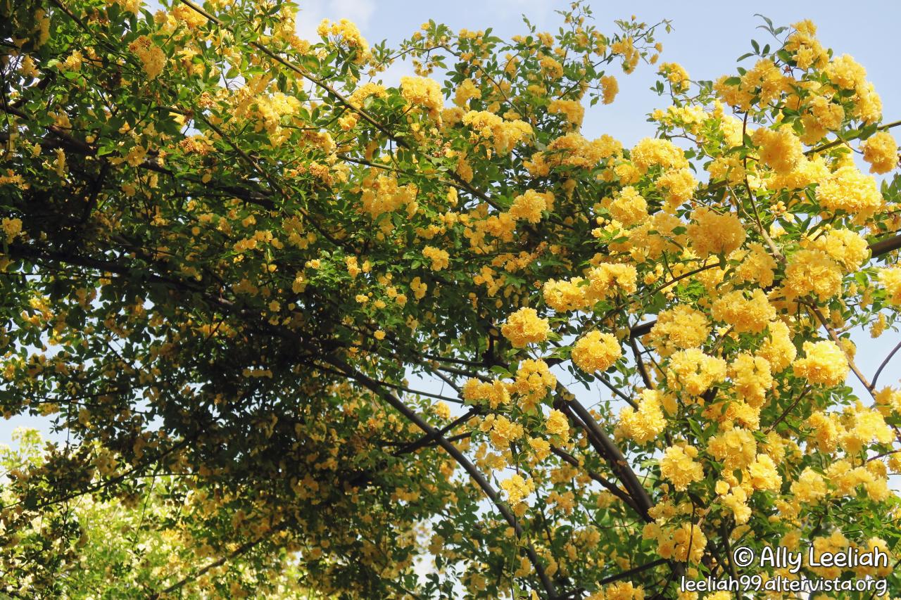 Primavera al Parco di San Giovanni © leeliah99.altervista.org