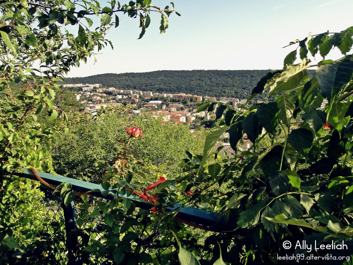 Una rosa fortunata si gode Trieste dall'alto © leeliah99.altervista.org