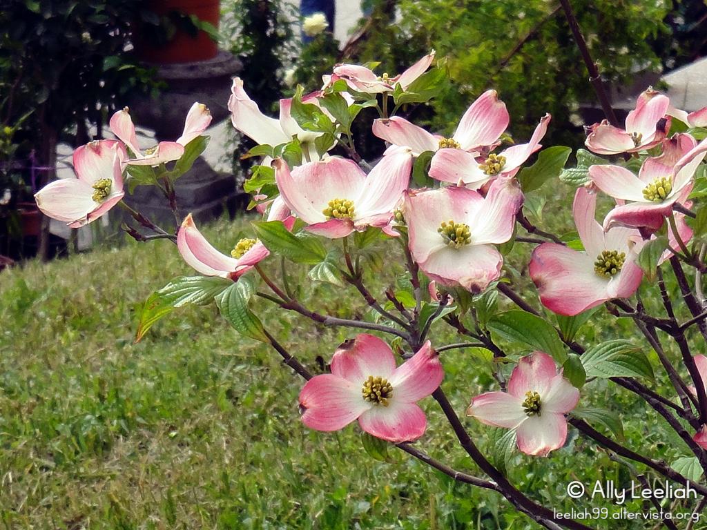 Horti Tergestini 2012: fiori rosa © leeliah99.altervista.org