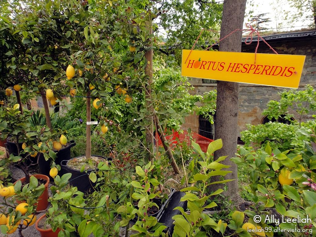 Horti Tergestini 2012 © leeliah99.altervista.org