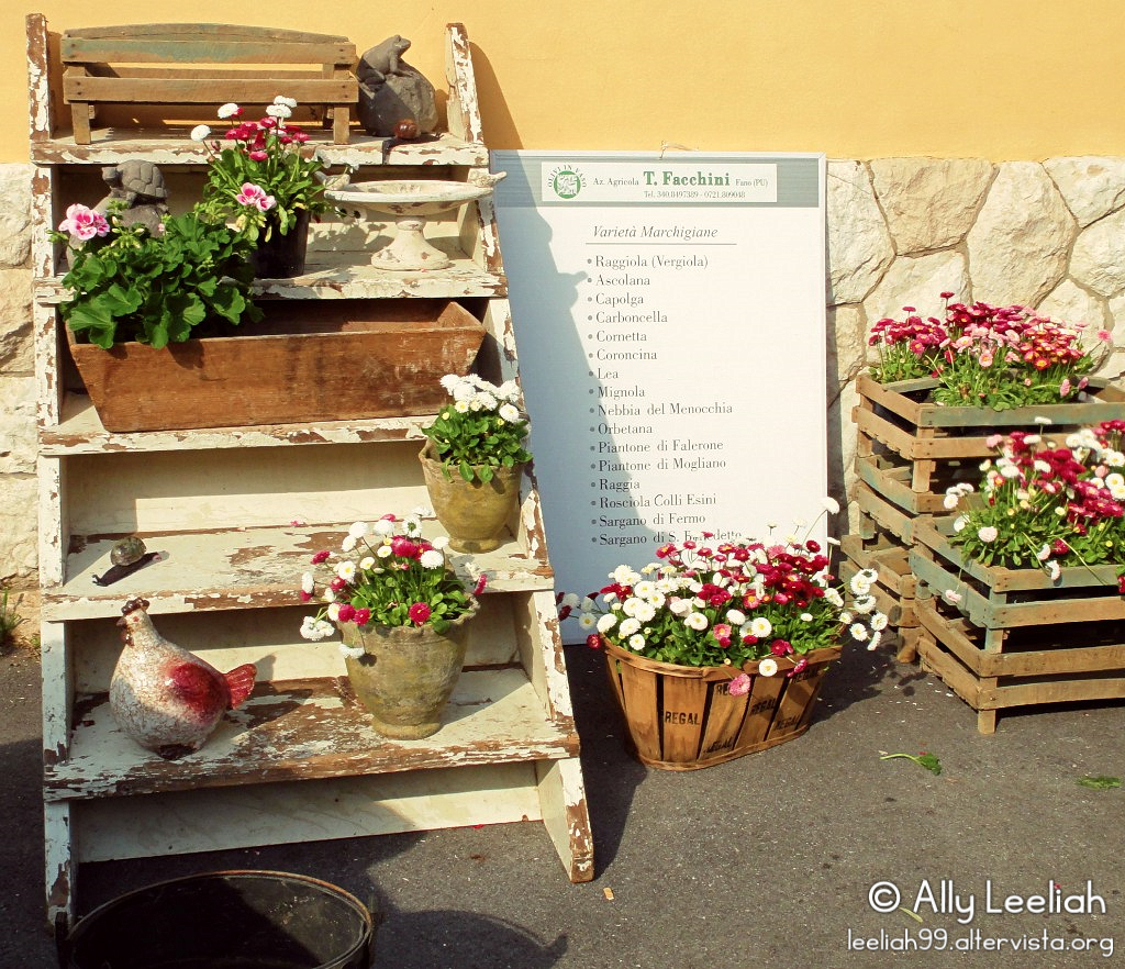 Horti Tergestini 2013 © leeliah99.altervista.org