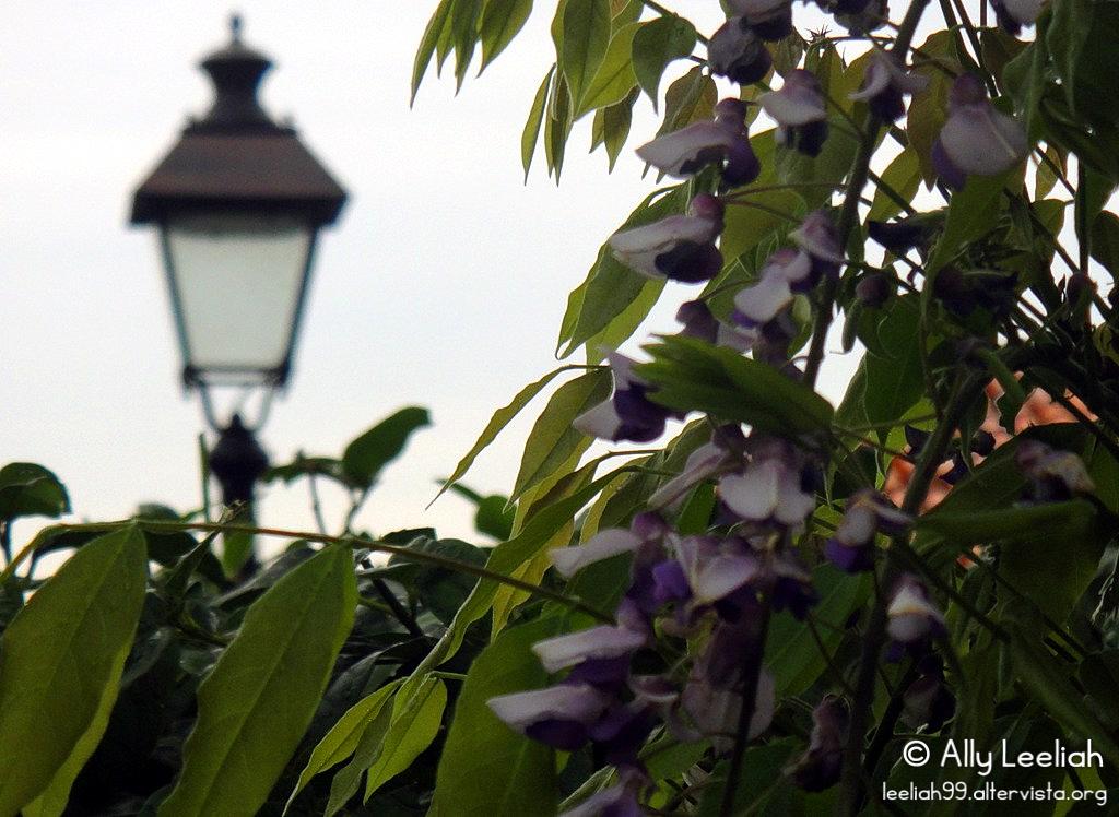 Horti Tergestini 2014 © leeliah99.altervista.org