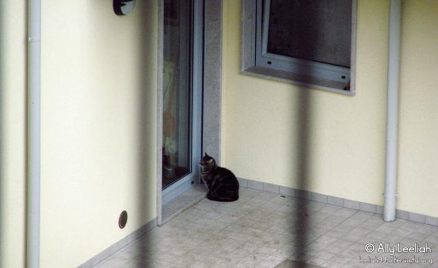 Il gatto dei vicini © leeliah99.altervista.org