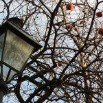 Parco di San Giovanni a Trieste © leeliah99.altervista.org