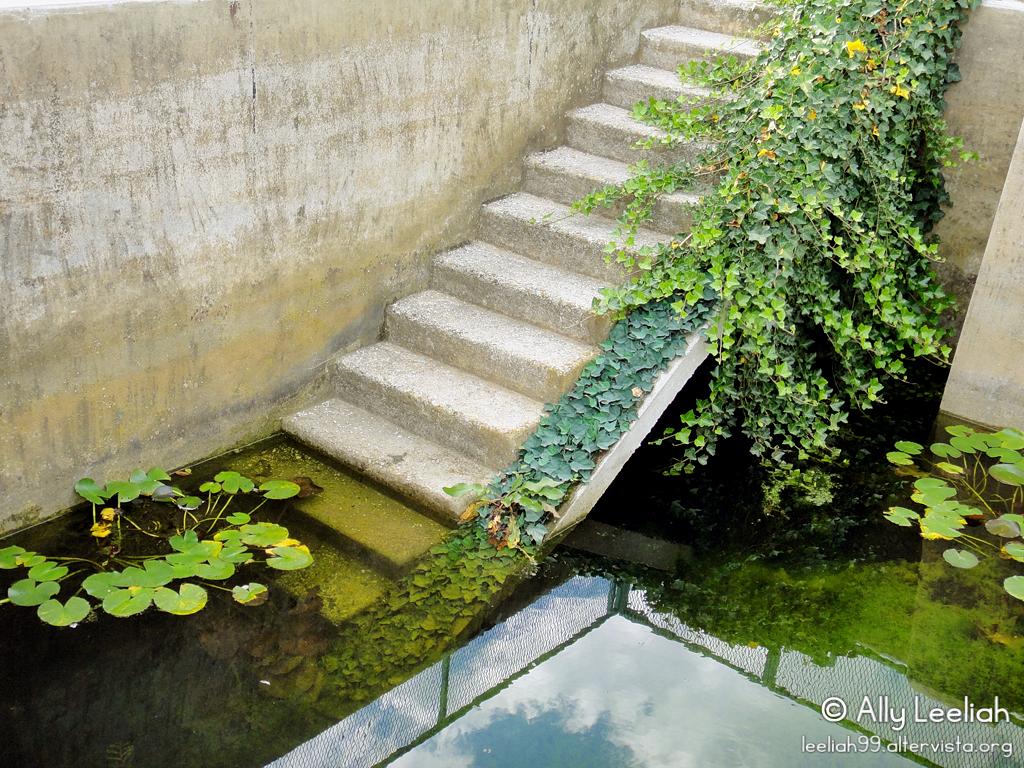 Trieste: roseto del Parco di San Giovanni © leeliah99.altervista.org