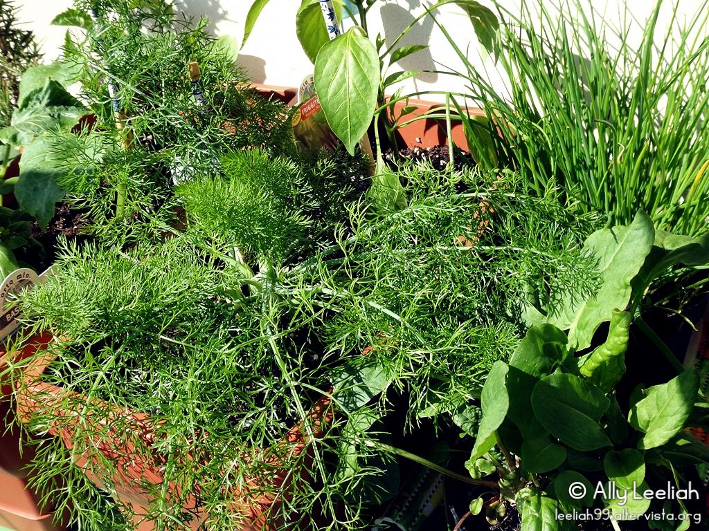 Primavera sul terrazzo: orto © leeliah99.altervista.org