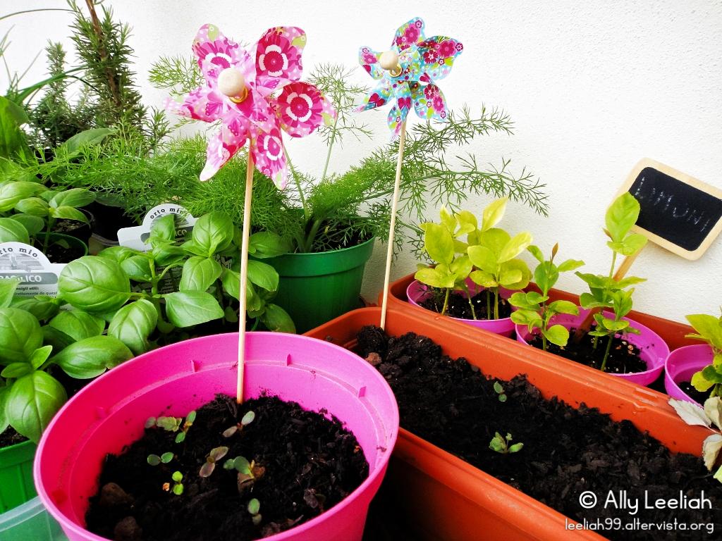 Primavera sul terrazzo: piccoli cinorrodi di rose crescono © leeliah99.altervista.org