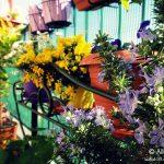 Primavera sul terrazzo: rosmarino © leeliah99.altervista.org