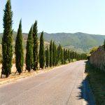 Viale di cipressi a Calci in Toscana © leeliah99.altervista.org