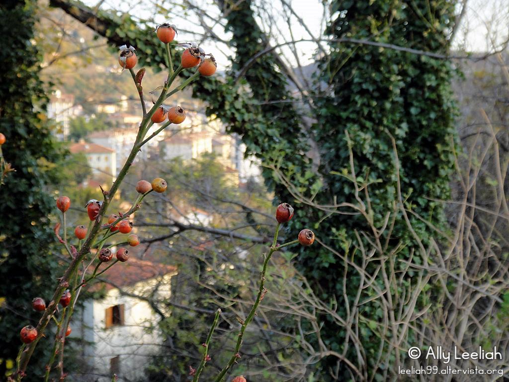 Trieste: Parco di San Giovanni a dicembre © leeliah99.altervista.org