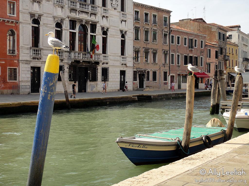 Venezia 2011: gabbiani in fila © leeliah99.altervista.org