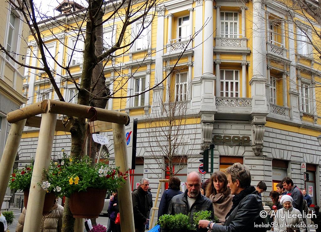 Viale in Fiore 2014 © leeliah99.altervista.org