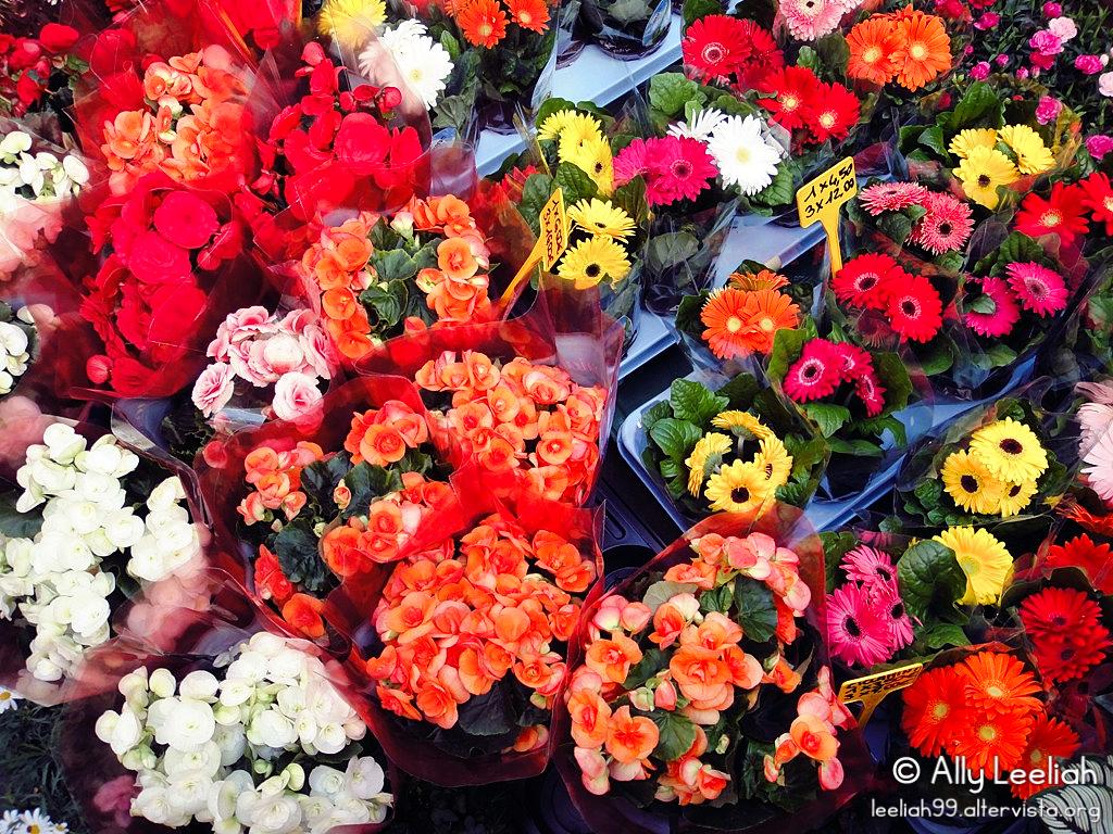 Viale in Fiore 2012 © leeliah99.altervista.org