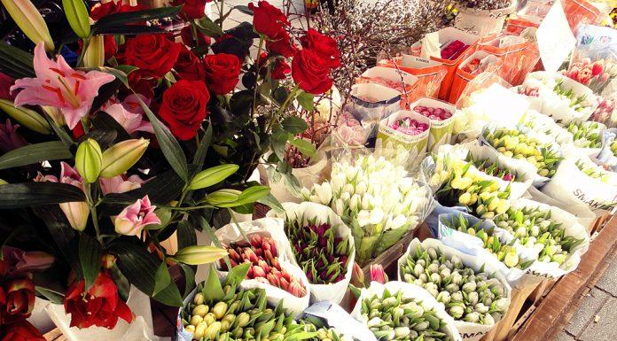 Viale in Fiore 2012: tulipani & rose © leeliah99.altervista.org