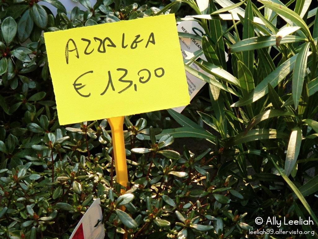 Viale in Fiore 2013 © leeliah99.altervista.org